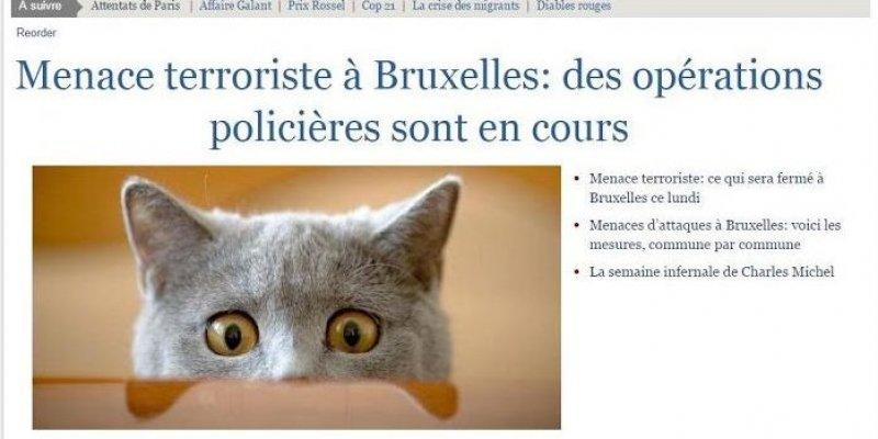 Les-medias-belges-se-sont-aussi-preter-au-jeu-des-chats_3389768_800x400